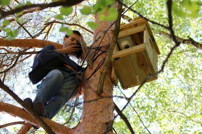 Полет на слабом сигнале: совы, ястребы, бобры и видеонаблюдение - 2