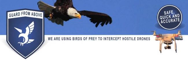 Охранять британские тюрьмы и аэропорты от дронов будут настоящие орлы