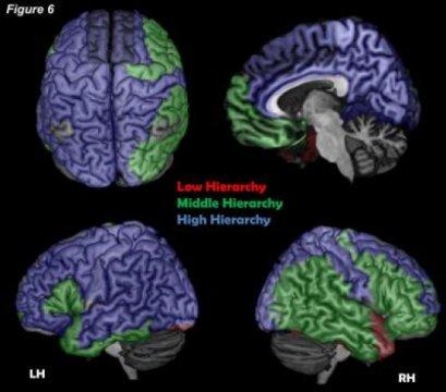 В Гарварде считают, что нашли физический центр человеческого сознания - 2