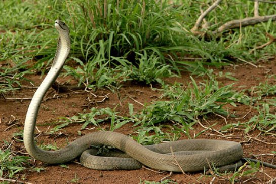 Зрение человека хорошо определяет змей и меньше — других животных