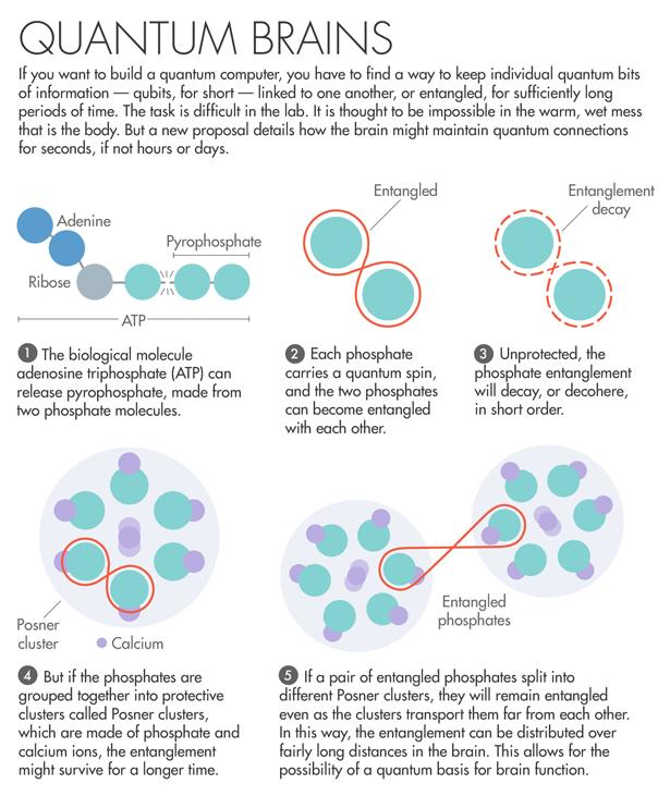 Новый поворот в квантовой теории мозга - 3