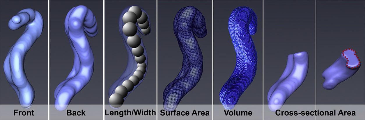 ДНК составляет лишь половину объёма хромосом. Всё остальное — оболочка неизвестной функциональности - 1