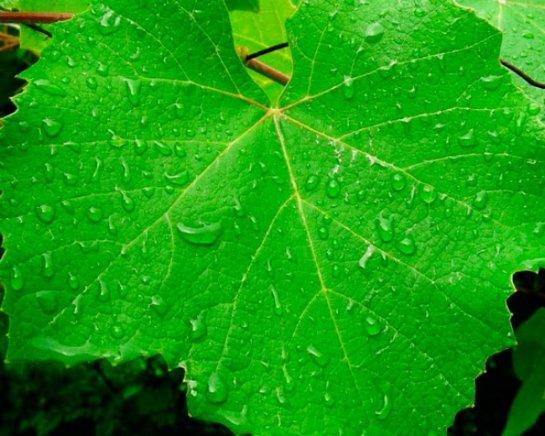 Ученые смогли ускорить фотосинтез животных