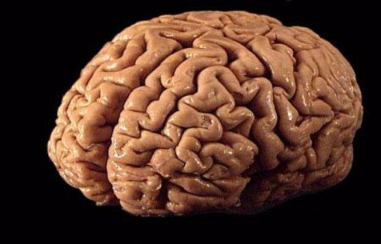 Ученые узнали, почему в прошлом мозг человека вырос и стал более сложным, чем у животных