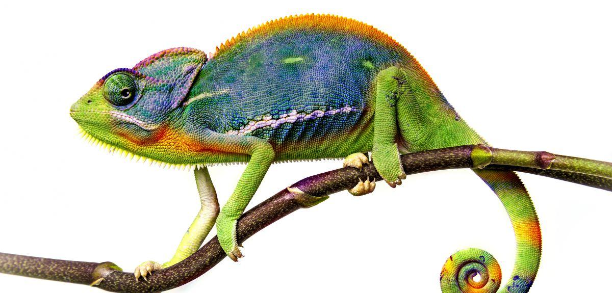 Физика в мире животных: хамелеоны и их цвет - 2