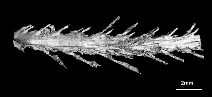 В куске янтаря нашли часть пернатого динозавра возрастом 99 млн лет