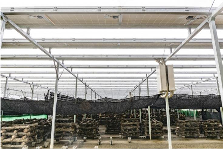 Партнеры намерены внедрять свою разработку на существующих фермах и предлагать ее при строительстве новых