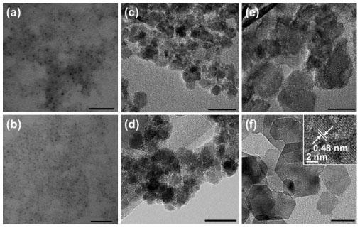 Физика в мире животных: магниточувствительные бактерии и их компас - 4