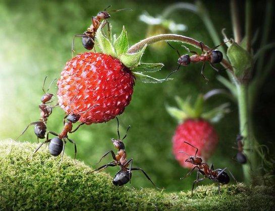 Ученые решили спрогнозировать последствия глобального потепления по муравьям