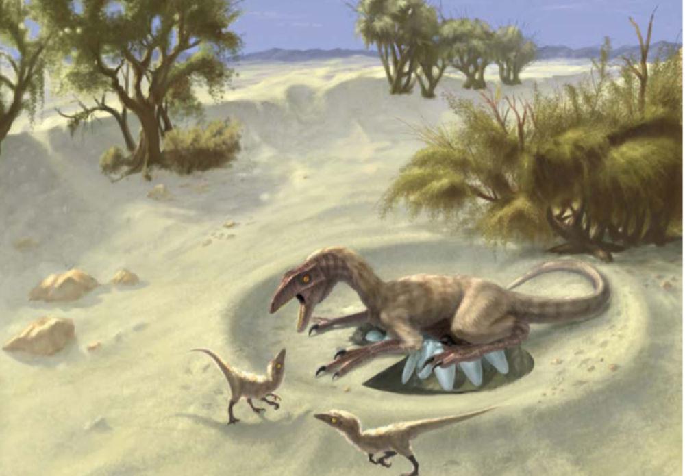 Яйца динозавров как источник информации о жизни древних обитателей Земли - 2