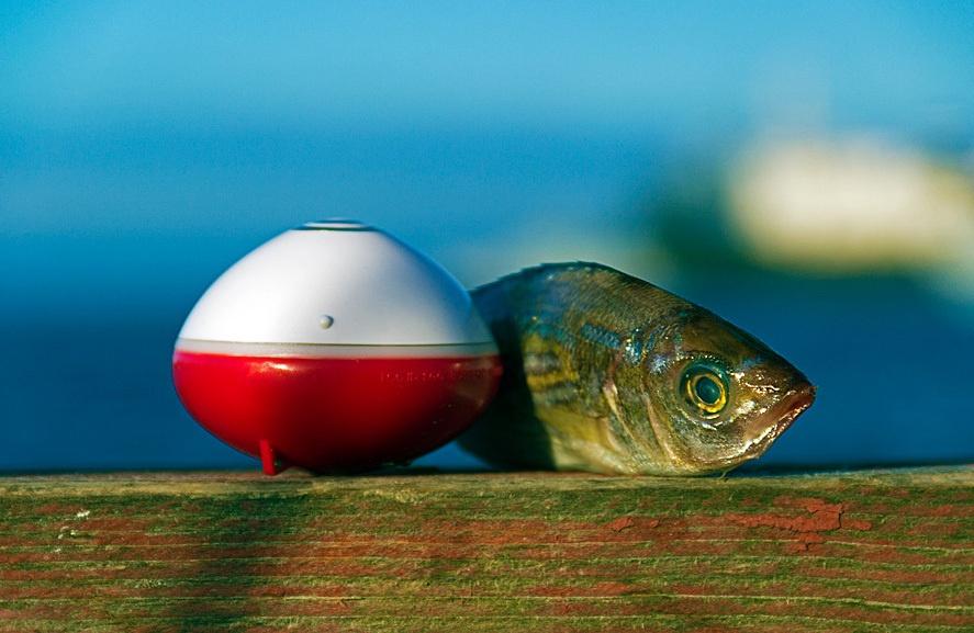 Гаджет для ловли рыбы из мест, где она реально есть - 1