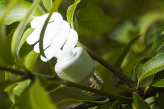 Ученые придумали, как реализовать искусственный фотосинтез
