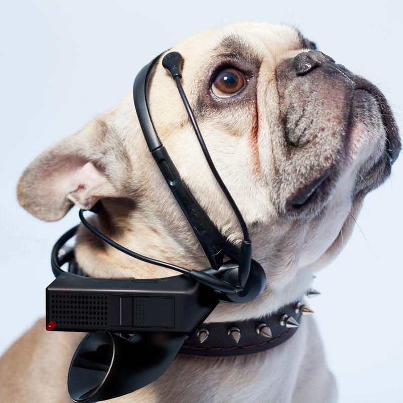 Краудфандинг собрал деньги на устройство для чтения мыслей собак, но гаджет не вышел - 1