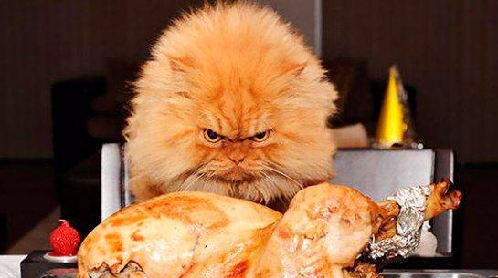 Ученые рассказали, почему голодные люди злятся
