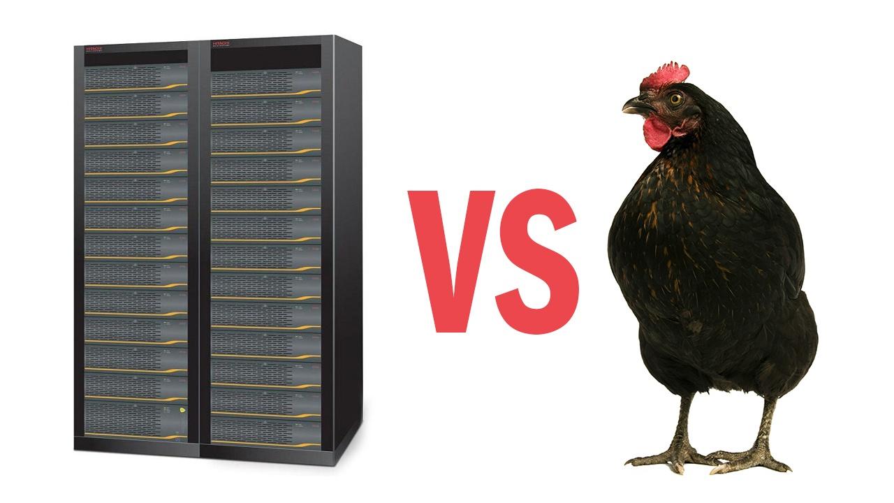 Чем СХД отличается от курицы? - 1