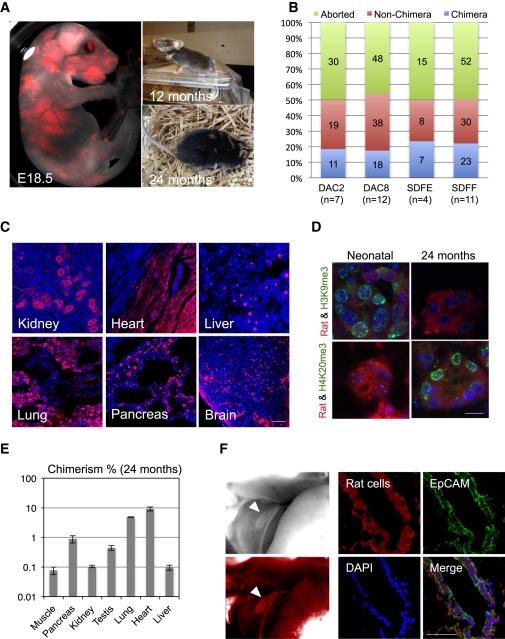 Генетики вырастили 4-недельный эмбрион свиньи с зачатками человеческих органов - 1