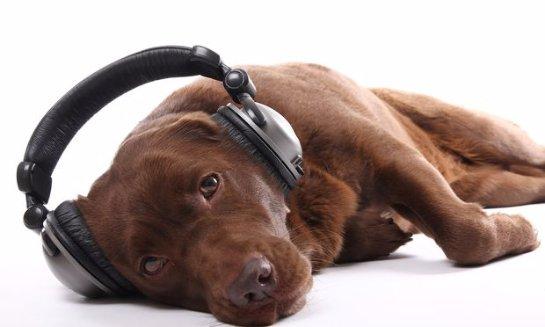 Ученые определили, какую музыку любят собаки