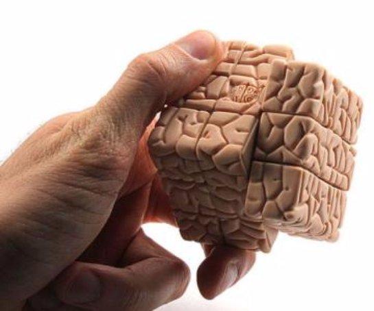 Ученые научились определять характер человека по мозговым извилинам