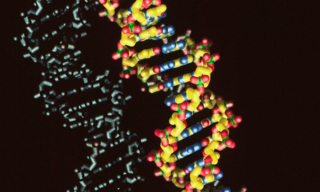 Создан первый жизнеспособный полусинтетический организм с шестью основаниями - 1