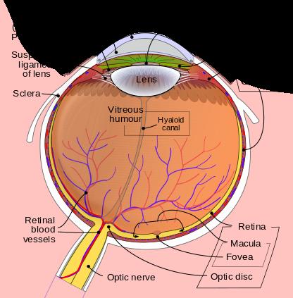«Аугментация» глаза: что мы встраиваем в него сегодня, и под что ещё останется место - 2