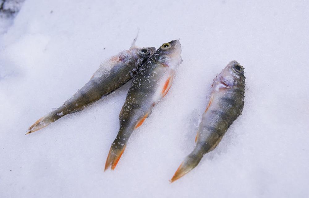 Особенности зимней рыбалки с эхолотом - 16