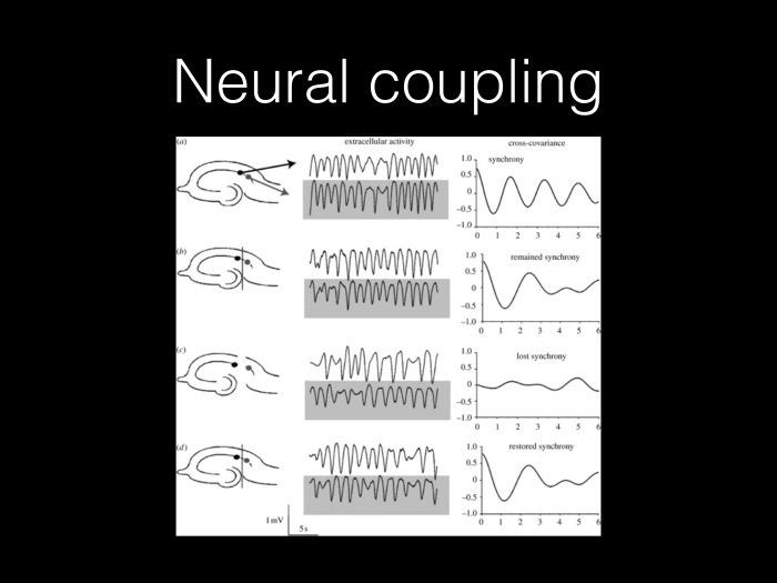 Исследование связности в мозге на основе электрофизиологических данных. Лекция в Яндексе - 6