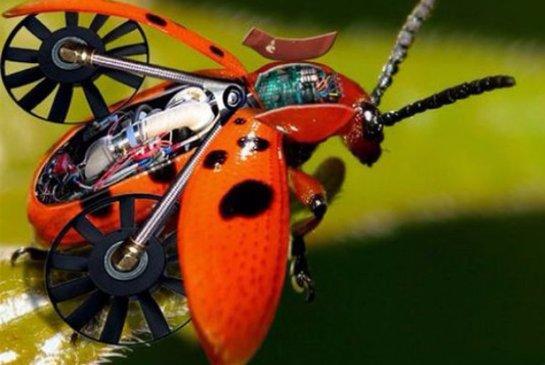 Американские ученые хотят создавать насекомых-киборгов