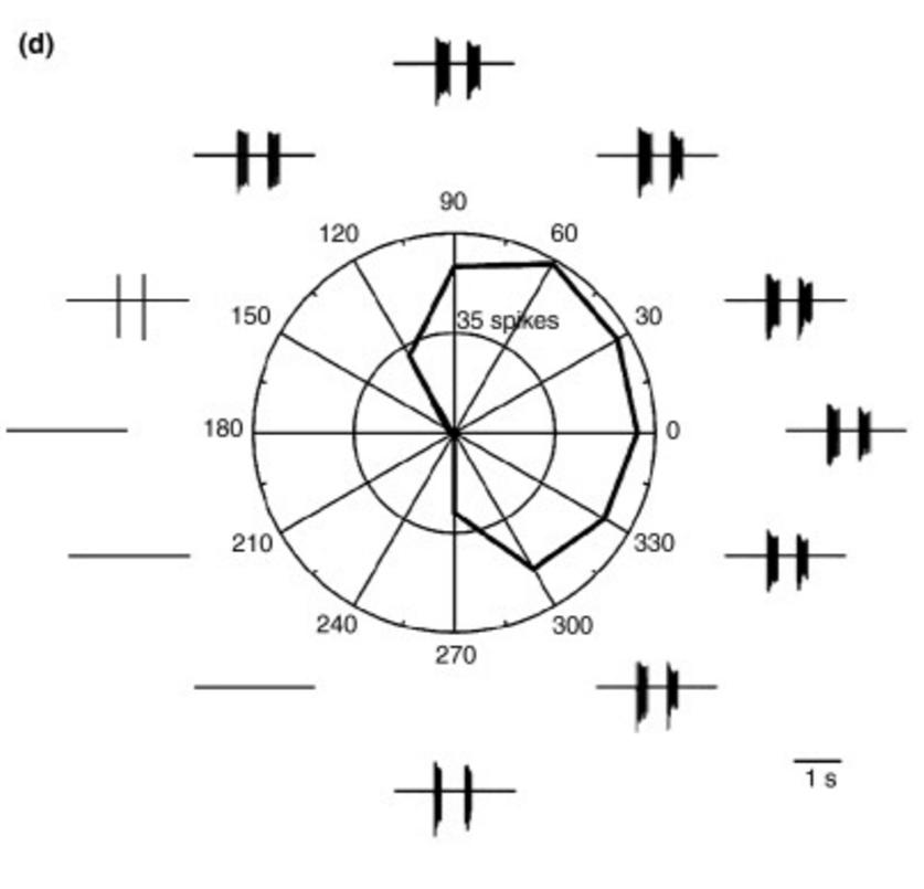 Логика сознания. Часть 11. Естественное кодирование зрительной и звуковой информации - 10