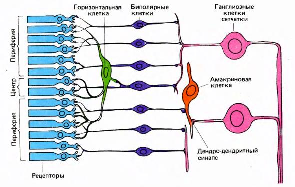 Логика сознания. Часть 11. Естественное кодирование зрительной и звуковой информации - 4