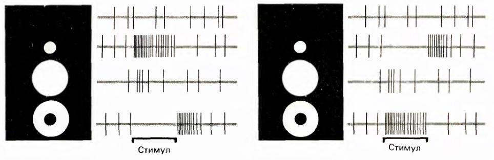 Логика сознания. Часть 11. Естественное кодирование зрительной и звуковой информации - 7