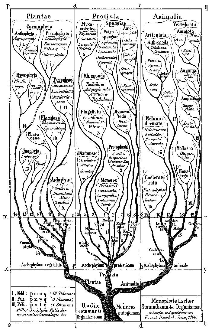 Новый подход к построению древа жизни - 2