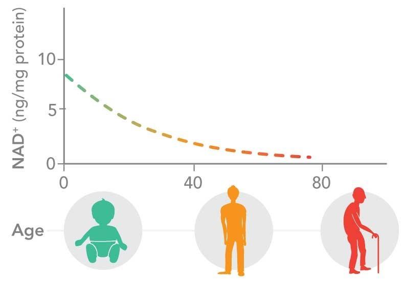 Радикальное продление жизни: вещества против старения - 8