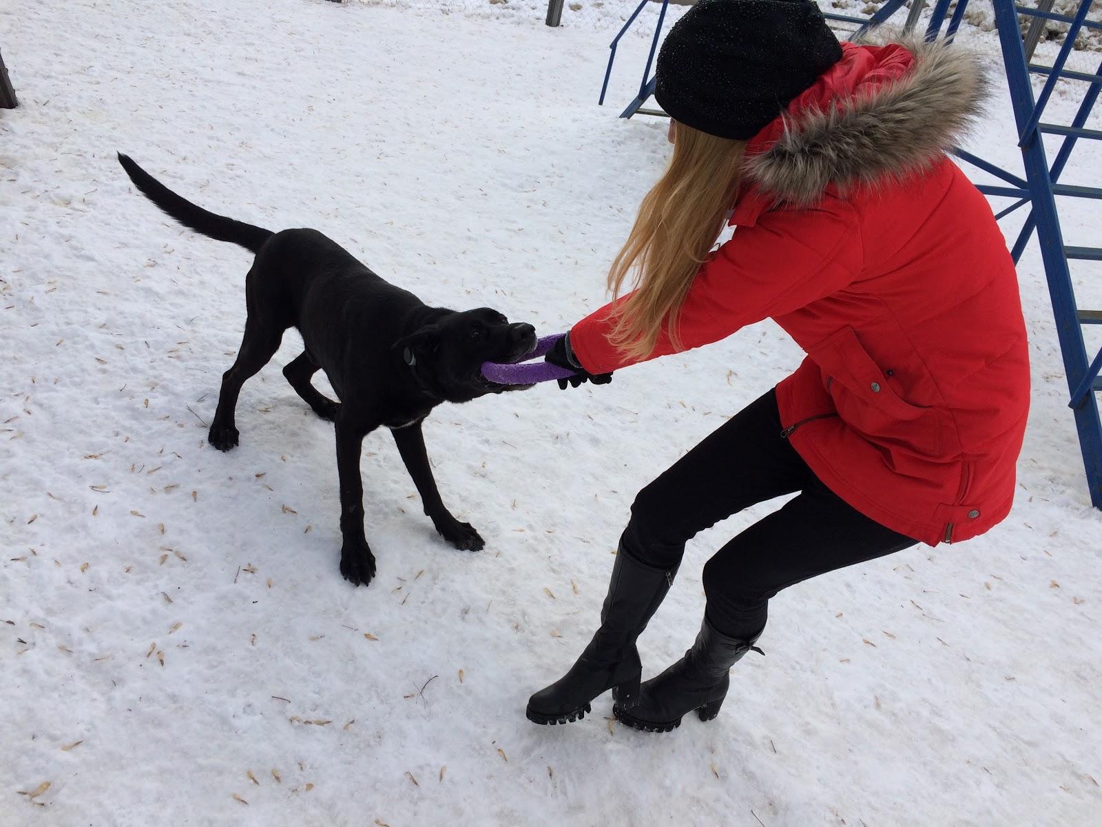 Тестируем на животных: как работает GPS-трекер для собак Mishiko в Москве? - 11