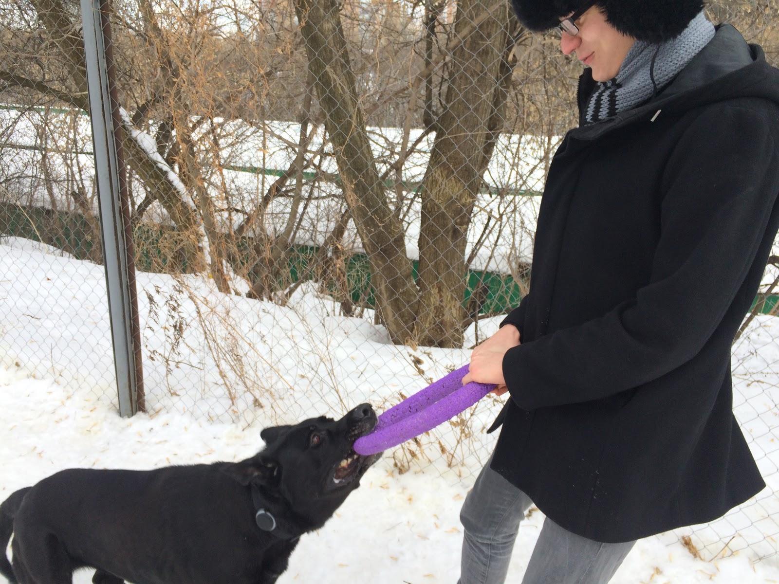 Тестируем на животных: как работает GPS-трекер для собак Mishiko в Москве? - 14