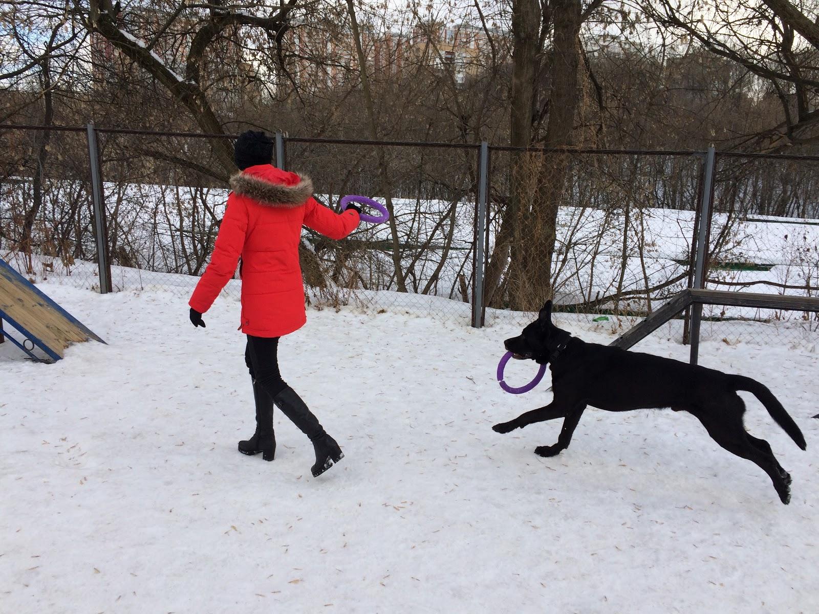 Тестируем на животных: как работает GPS-трекер для собак Mishiko в Москве? - 9