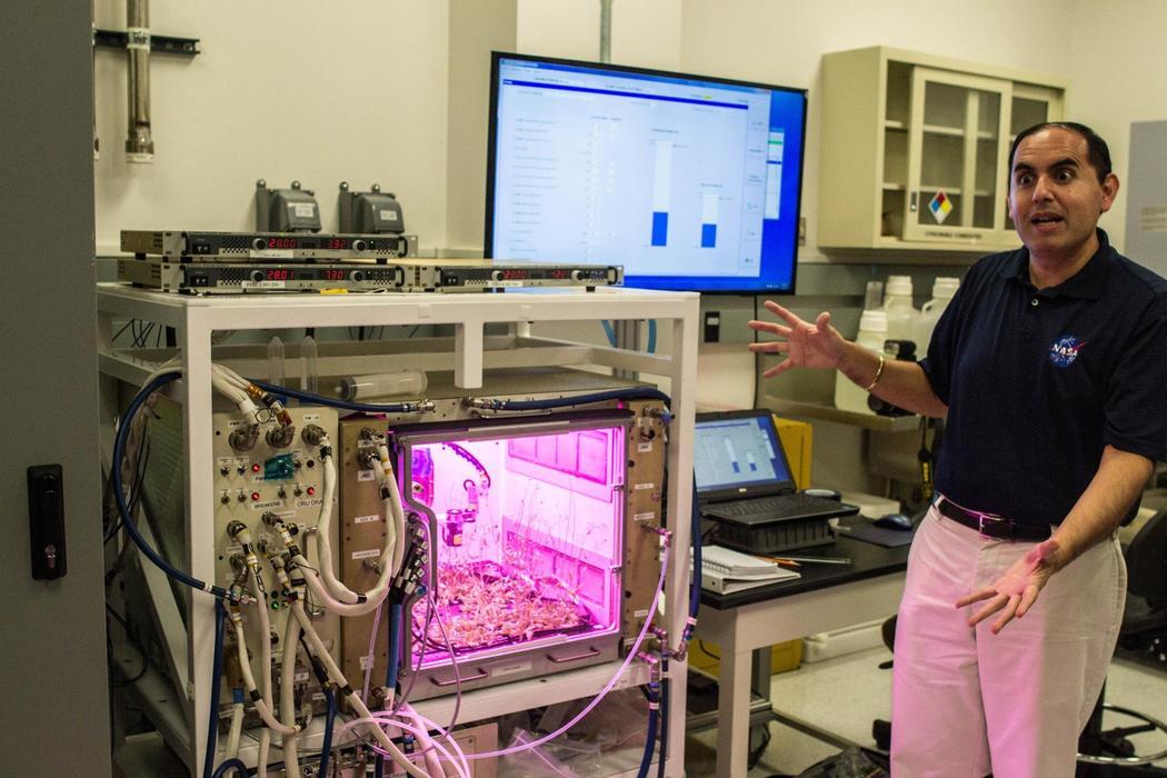 Овощи для астронавтов: как растят свежую зелень в лабораториях НАСА - 2