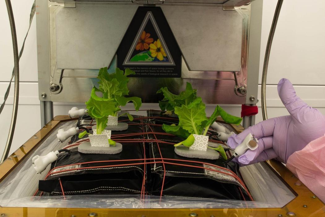 Овощи для астронавтов: как растят свежую зелень в лабораториях НАСА - 3