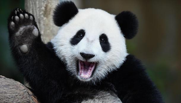 Открытый курс машинного обучения. Тема 1. Первичный анализ данных с Pandas - 1