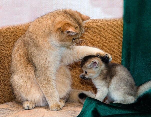 Доброе отношение приятно и котенку