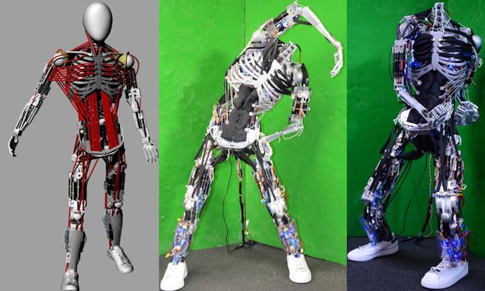Учёные предложили выращивать ткани для трансплантации в роботах - 2