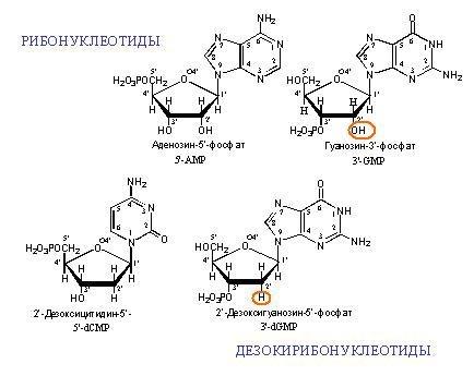 Генная инженерия бактерий: с чего всё начиналось и как это работает в лаборатории сегодня - 3