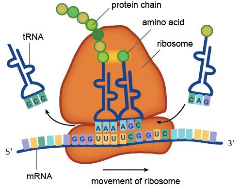Генная инженерия бактерий: с чего всё начиналось и как это работает в лаборатории сегодня - 7