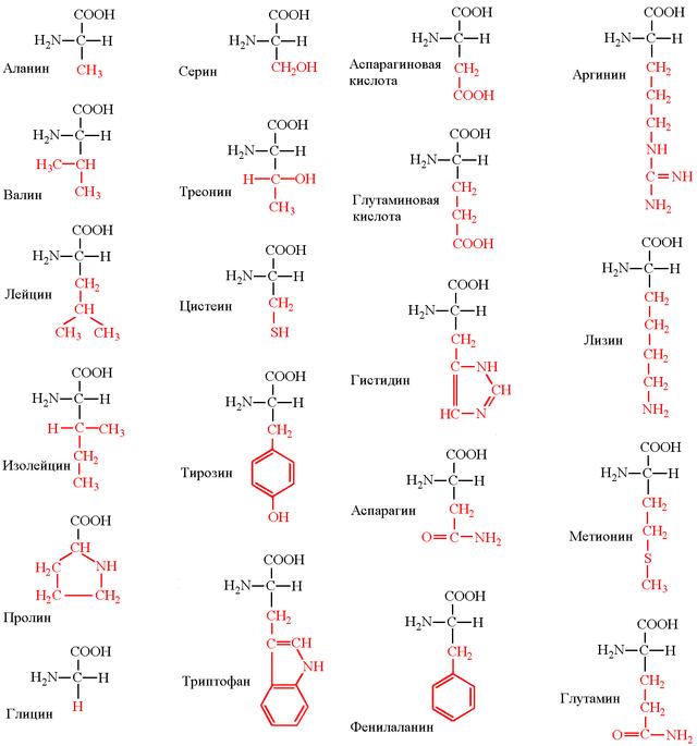 Генная инженерия бактерий: с чего всё начиналось и как это работает в лаборатории сегодня - 9