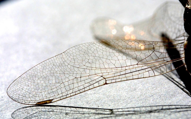 Сила природных сетей – в избыточных петлях - 3
