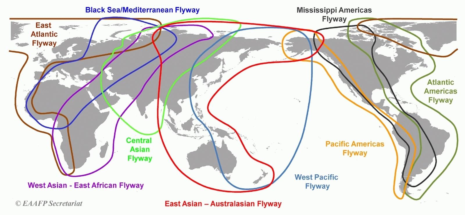 Common Bird Census, или биоинформатика в орнитологии. Проект в хорошие руки - 2