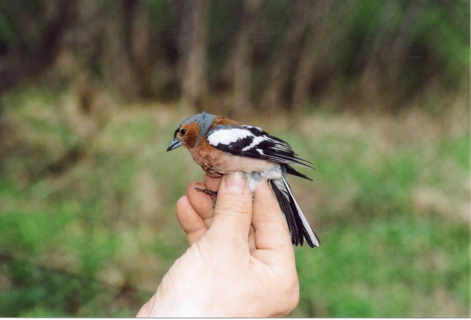 Common Bird Census, или биоинформатика в орнитологии. Проект в хорошие руки - 1