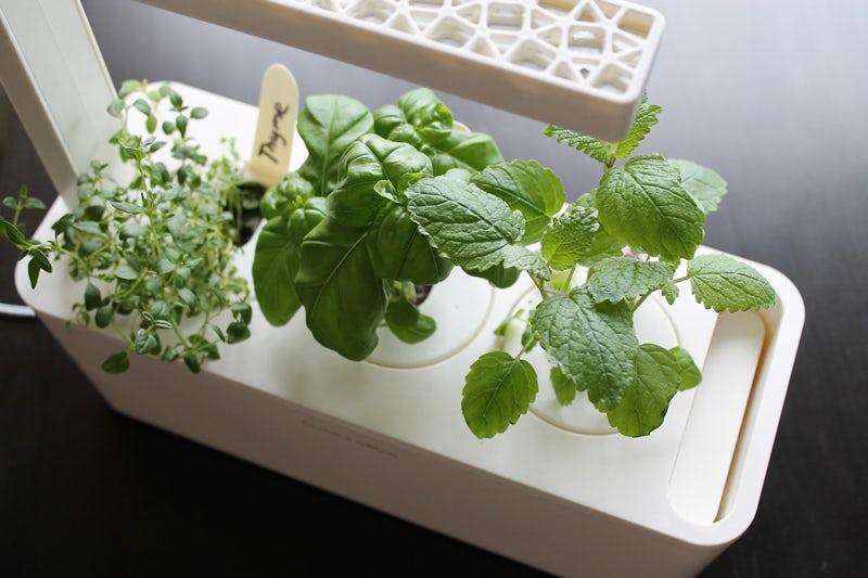 Портативный огород Click and Grow. Выращиваем зелень дома или в офисе круглый год - 6