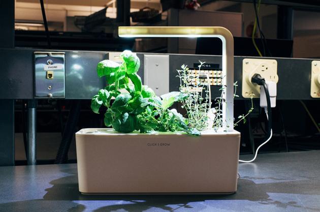 Портативный огород Click and Grow. Выращиваем зелень дома или в офисе круглый год - 8