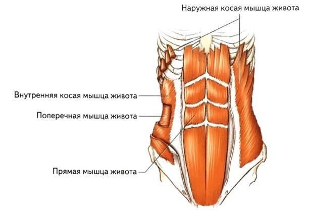 Программирование нервной системы человека. Рефлекс реципрокного торможения - 1