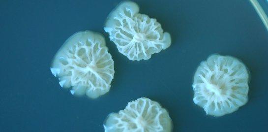 Бактерии начинают быстрее развиваться в открытом космосе